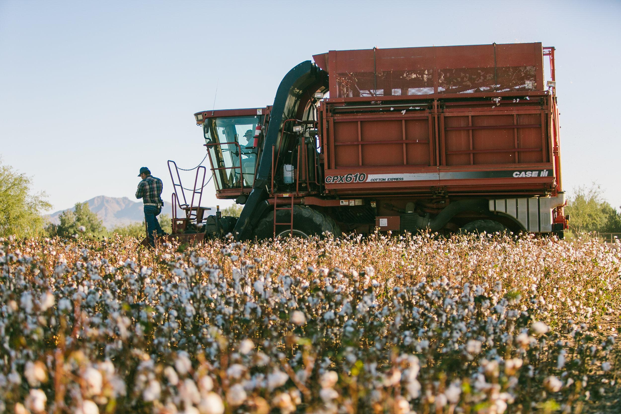 CottonFestival-20.jpg