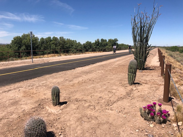Marana planted Saguaros and other cactuses as part of their Arbor Day Celebration.