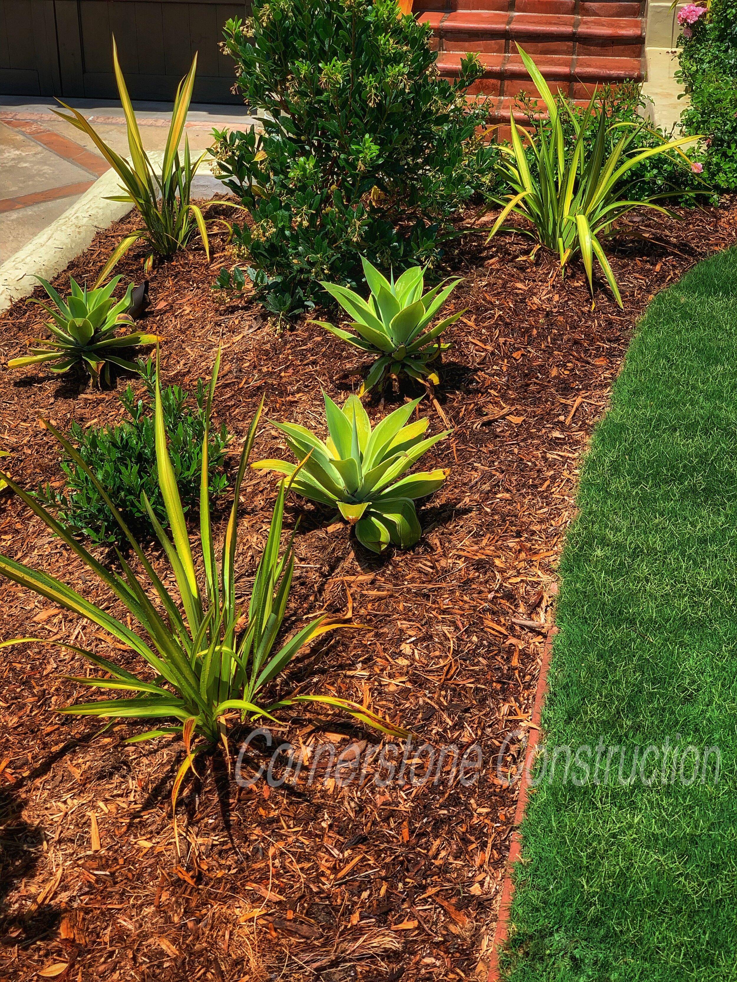 grass and mulch in backyard