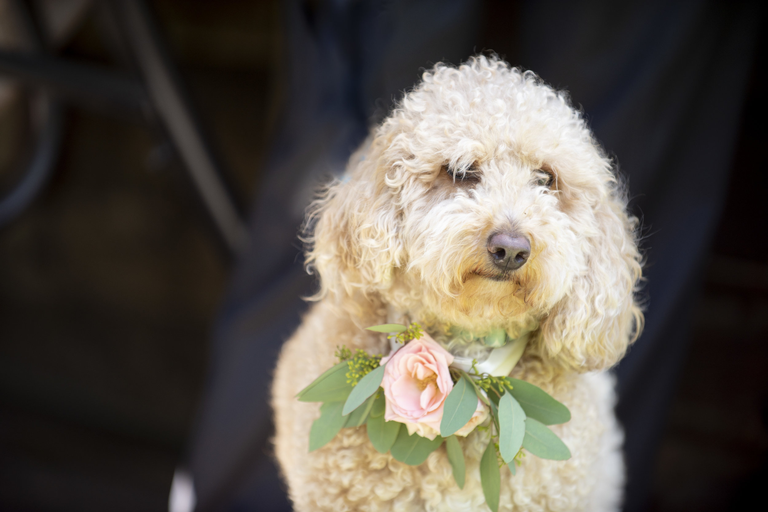 Pet Florals- Anna Schmidt Photography