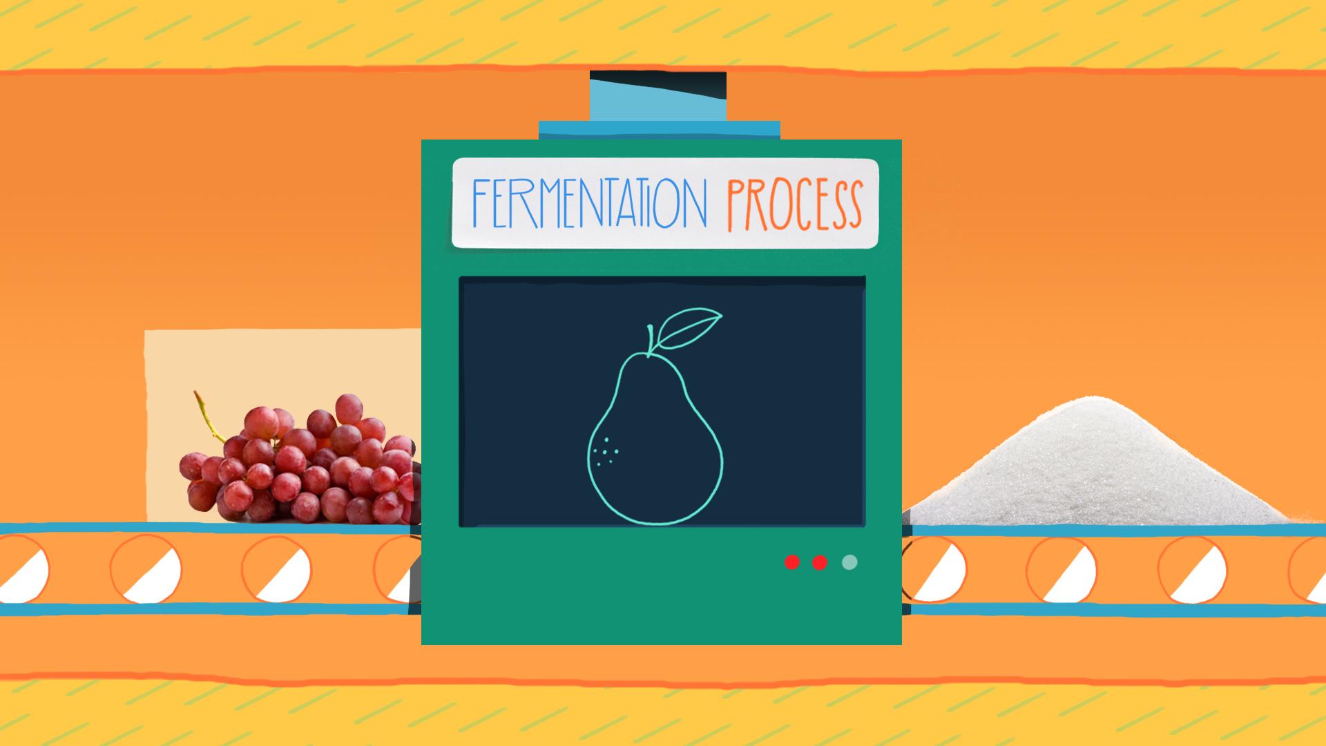 18_Fermentation_tc.jpg