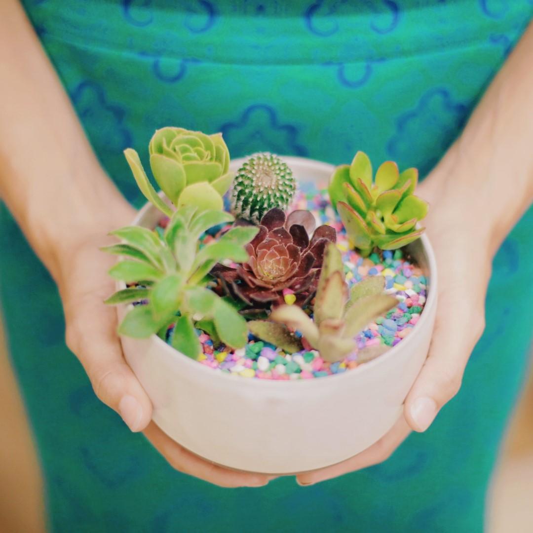 paiko succulent garden