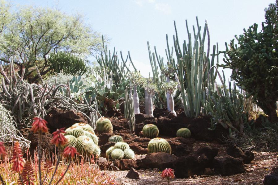 The Cactus Garden At Kcc Paiko