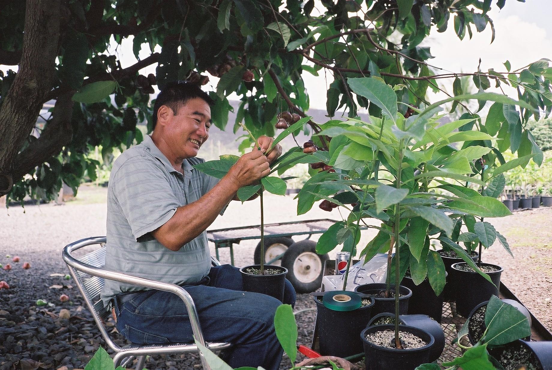 Frankie, himself,grafting baby avocado trees.