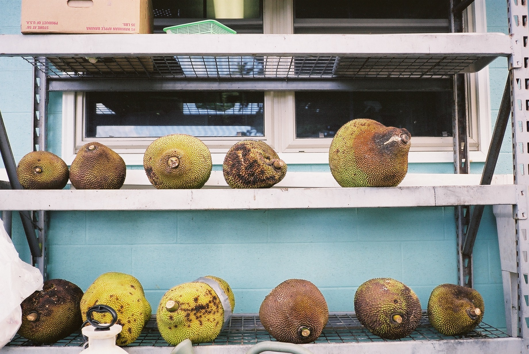 Jackfruit on shelves.