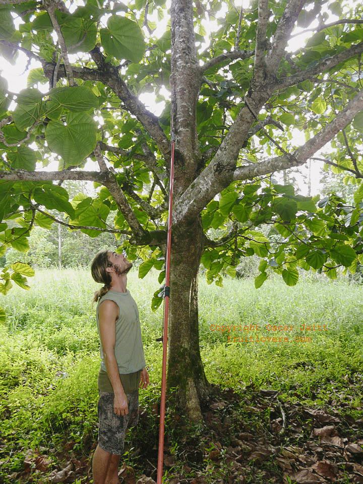 tropicalfruitforum.com