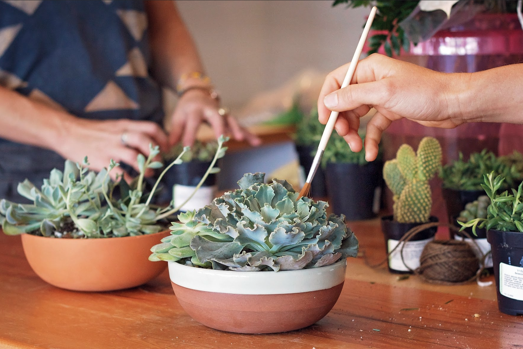 8_12_succulent garden workshop reminder.png