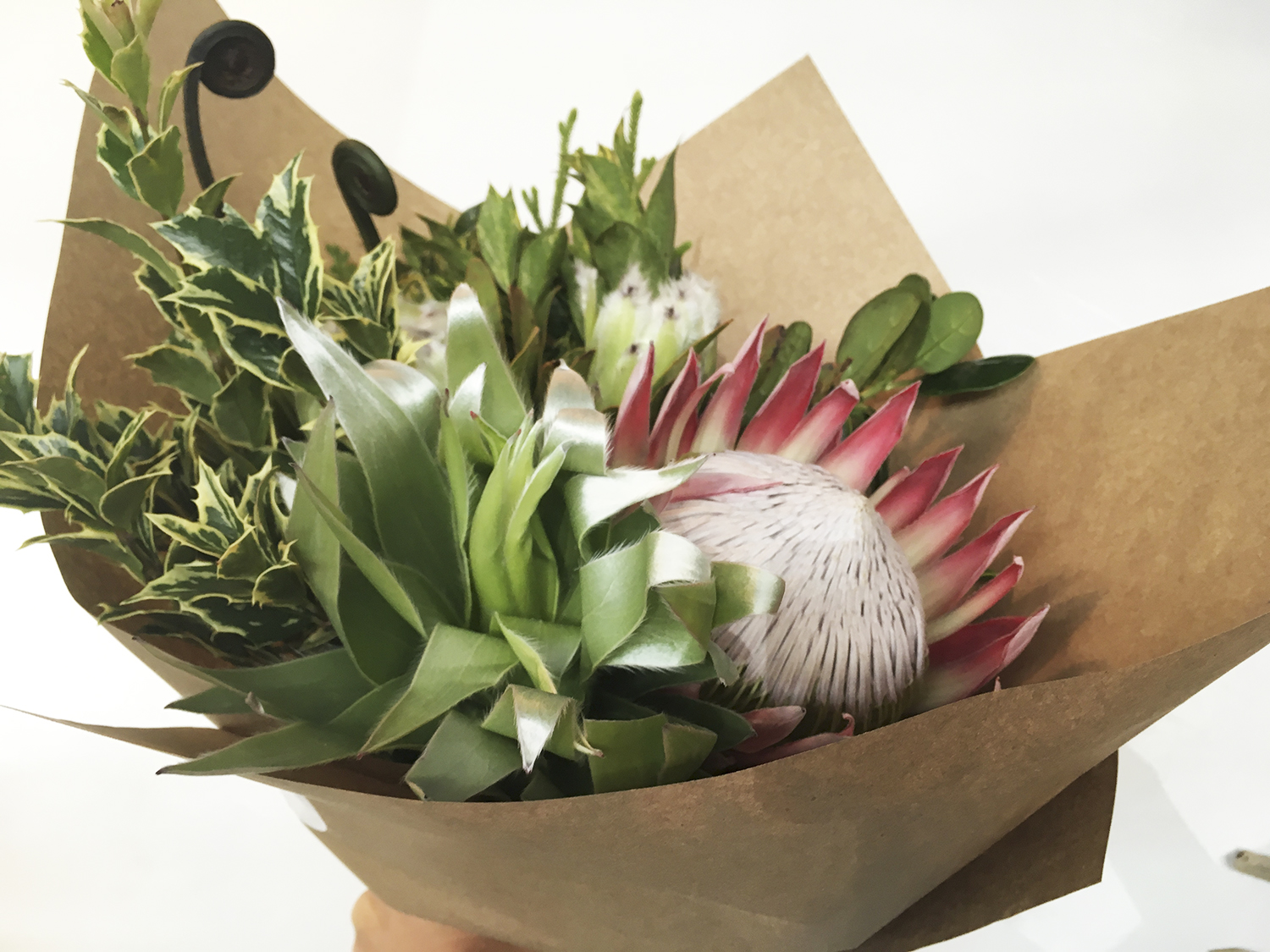 paiko protea bunch holiday