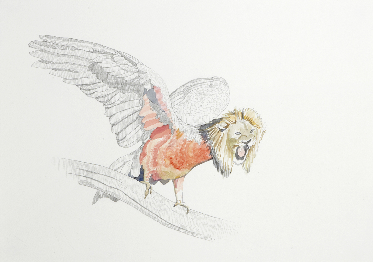 The Gallahs Calming Song, 2012, Watercolour and pencil on paper, 29.0 x 42.0 cm, Photo: Sam Scoufos
