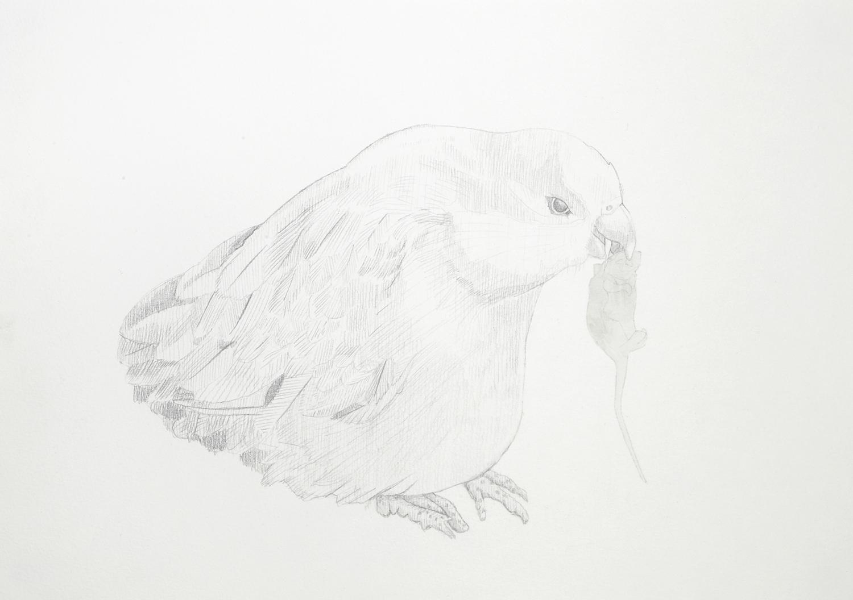Vampire Bird #1, 2012, Watercolour and pencil on paperPlateau, 2012, Watercolour and pencil on paper, 29.0 x 42.0 cm, Photo: Sam Scoufos