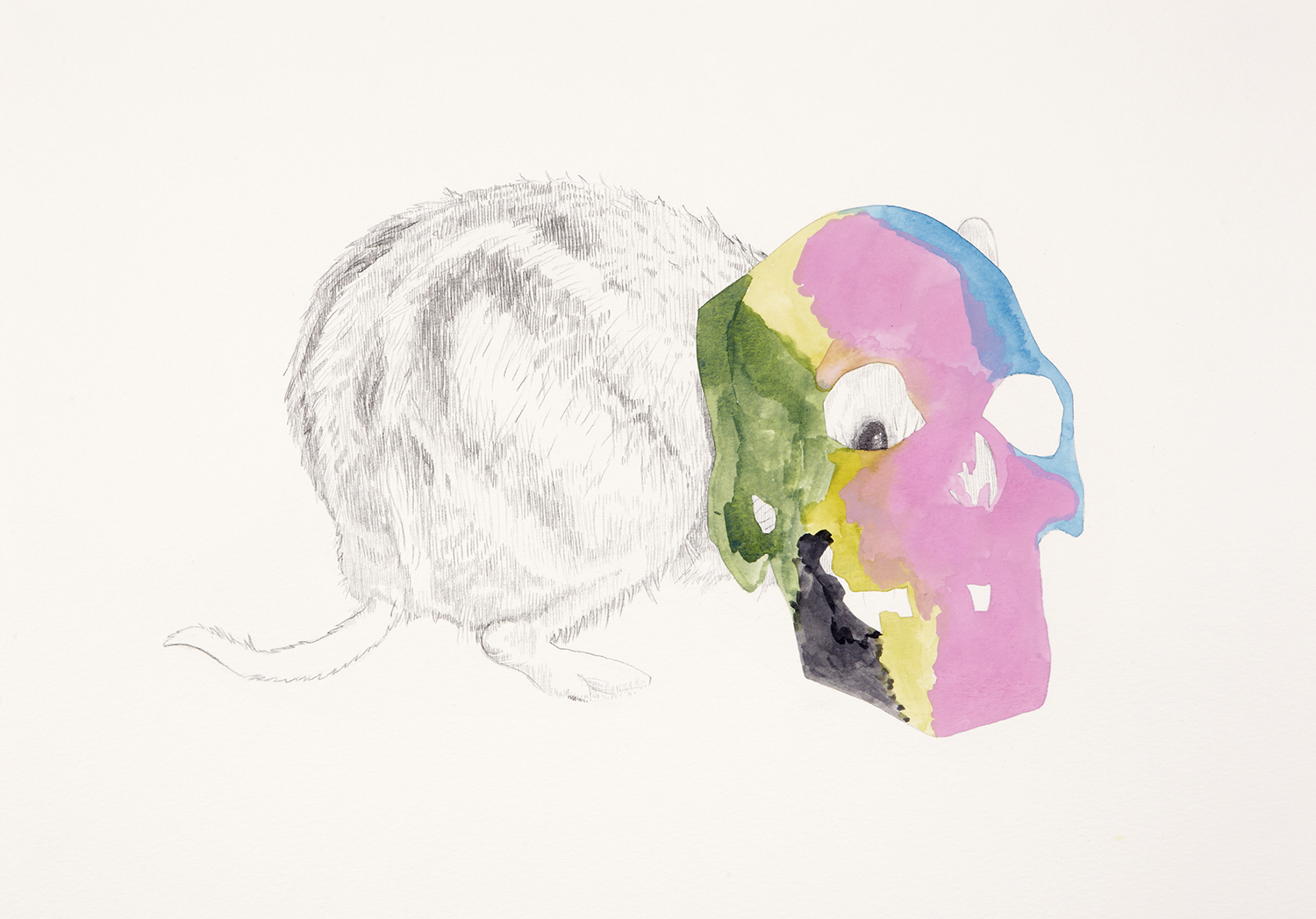 Skull Centric Behaviour #11, 2011, Watercolour and pencil on paper, 42.0 x 29.7 cm, Photo: Sam Scoufos