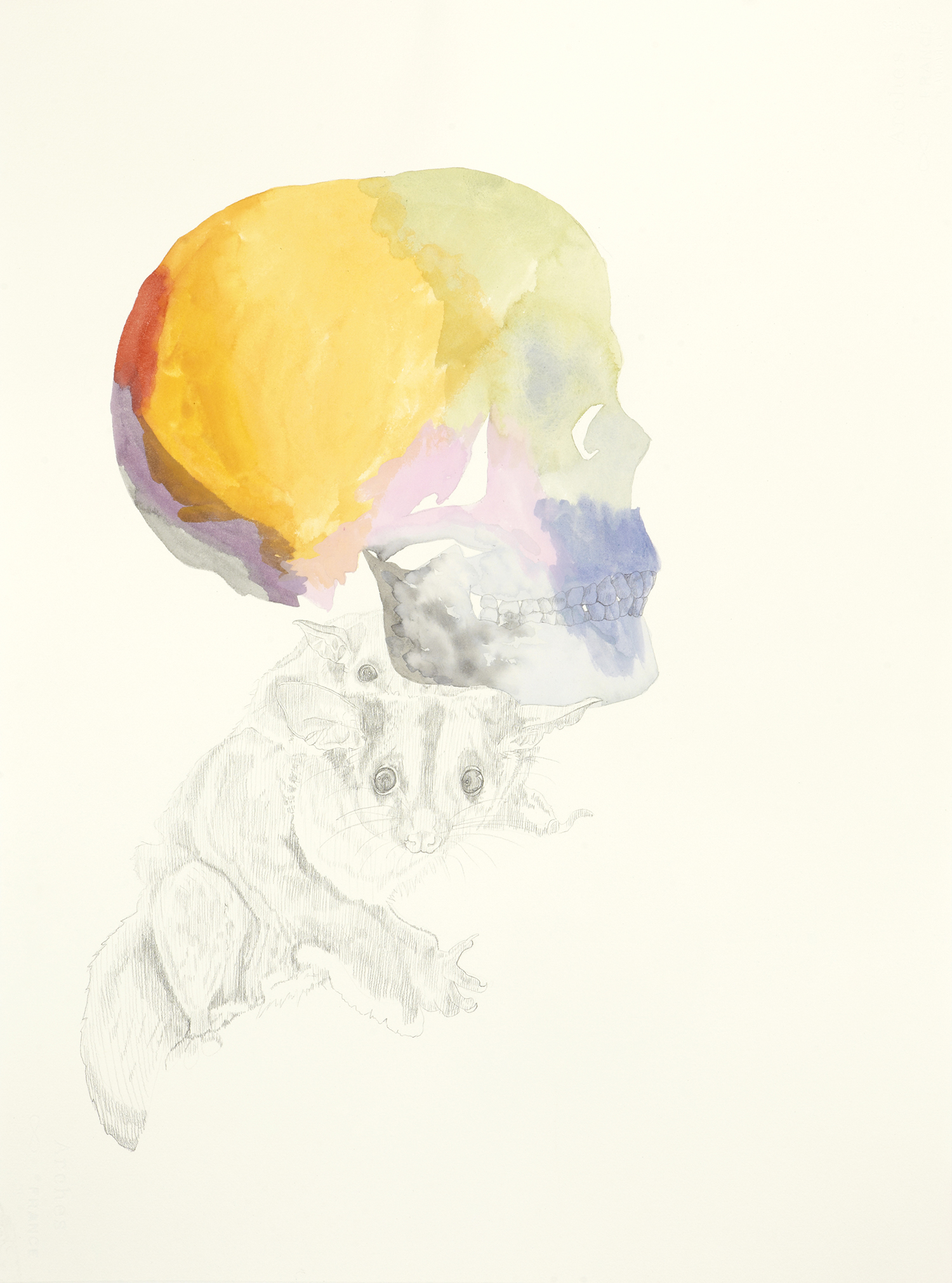 Let There Be Monsters, 2011, Watercolour and pencil on paper, 56.0 x 76.0 cm, Photo: Sam Scoufos