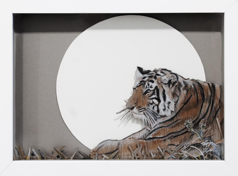 Tiger, 2008, Pastel on Card, 32 x 24 x 3.8 cm