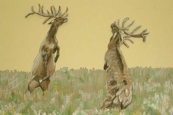 Deer, 2008, Pastel on card