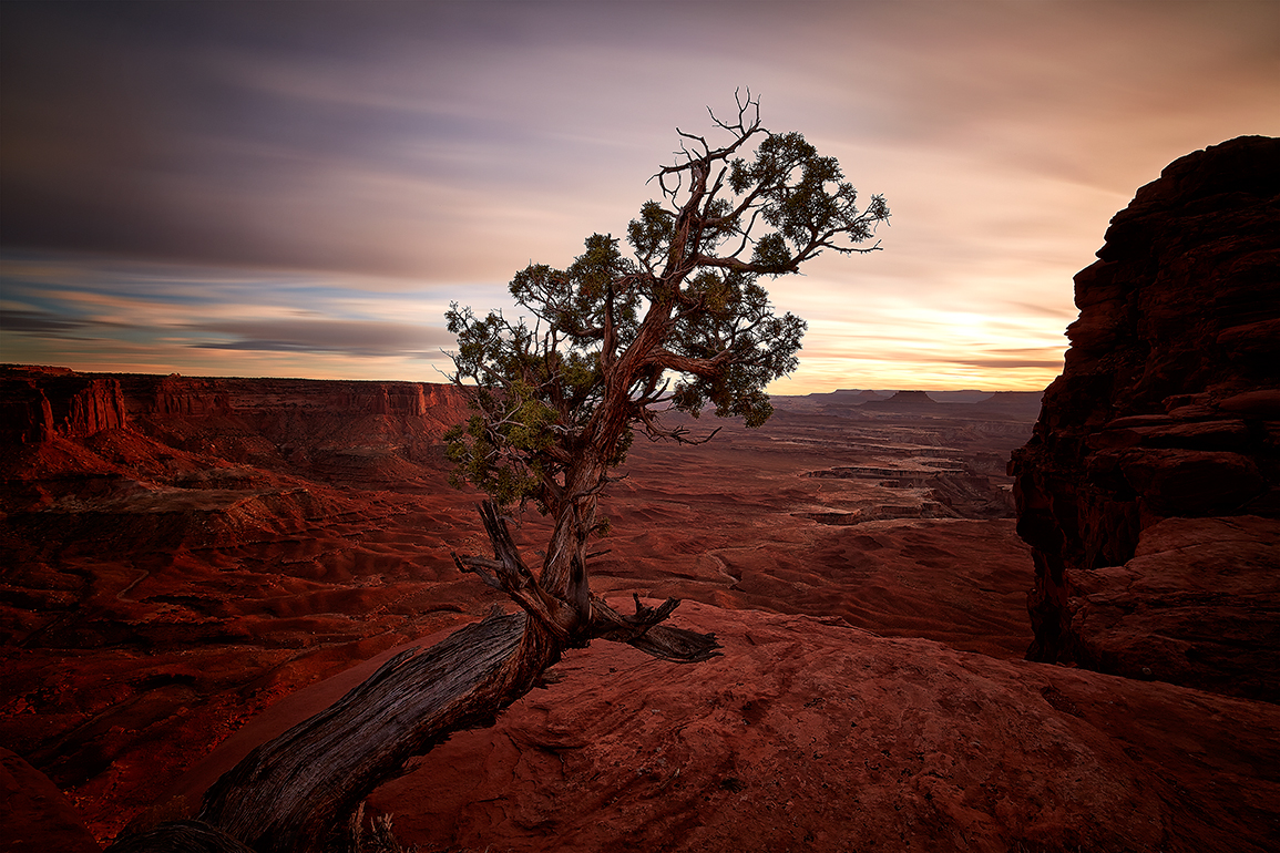 Canyonlands Tree.jpg
