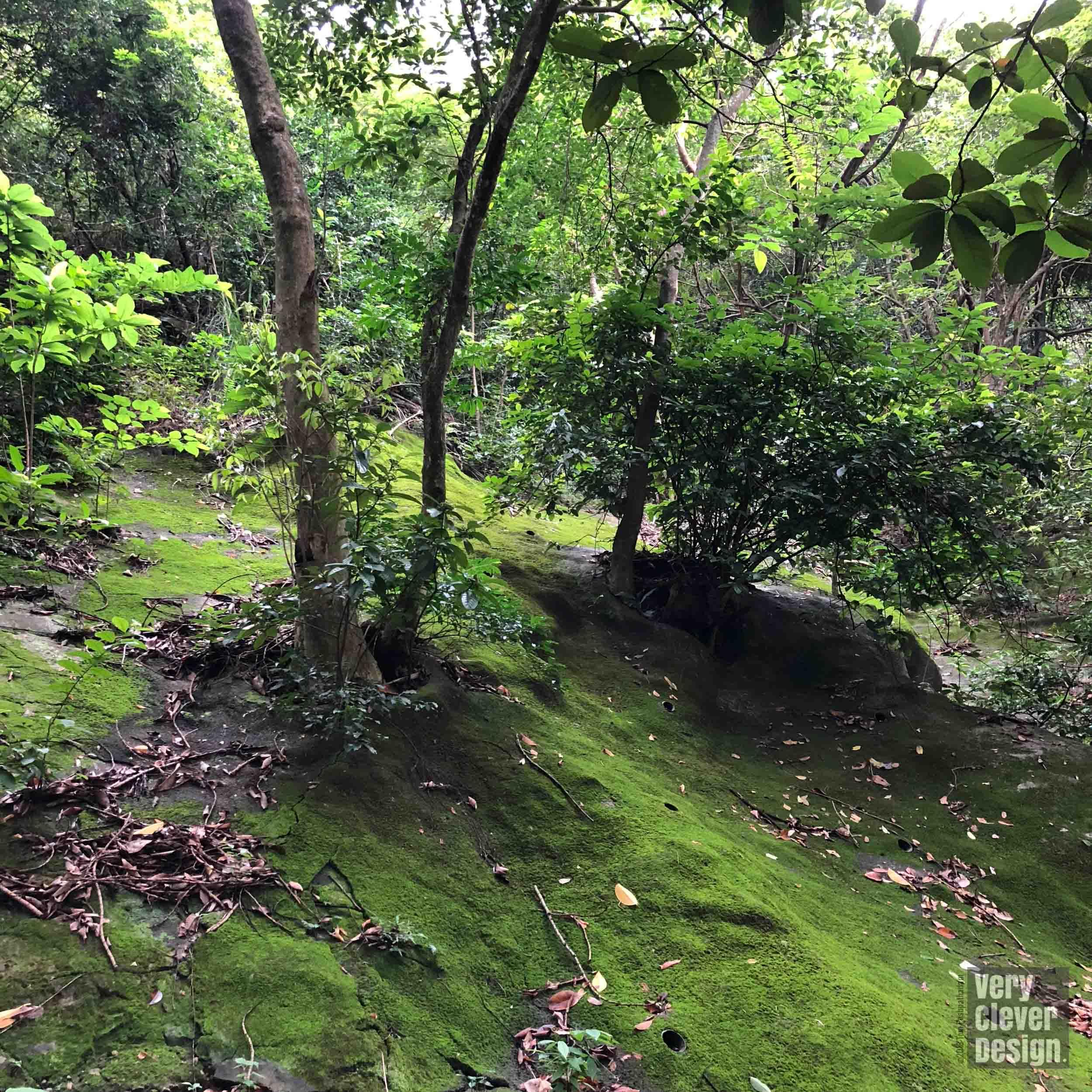 Moss covered REINFORCED SLOPE, BOWEN ROAD WALKING TRAIL