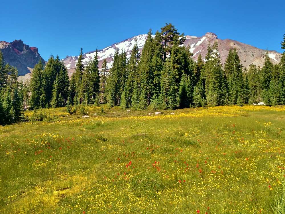 High Country Meadows Showing Off Right Now