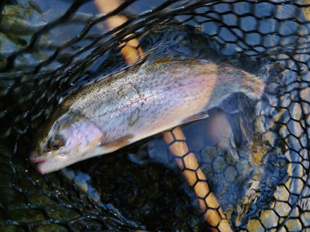 Upper Sac Fishing Welllll!