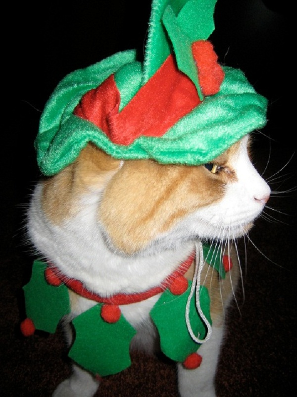 Merry Christmas From Scamper.jpg