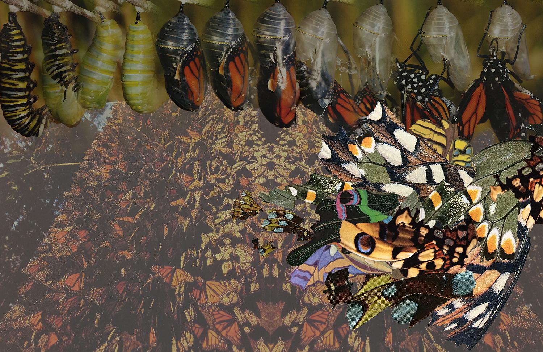 butterfly_moodboard.jpg