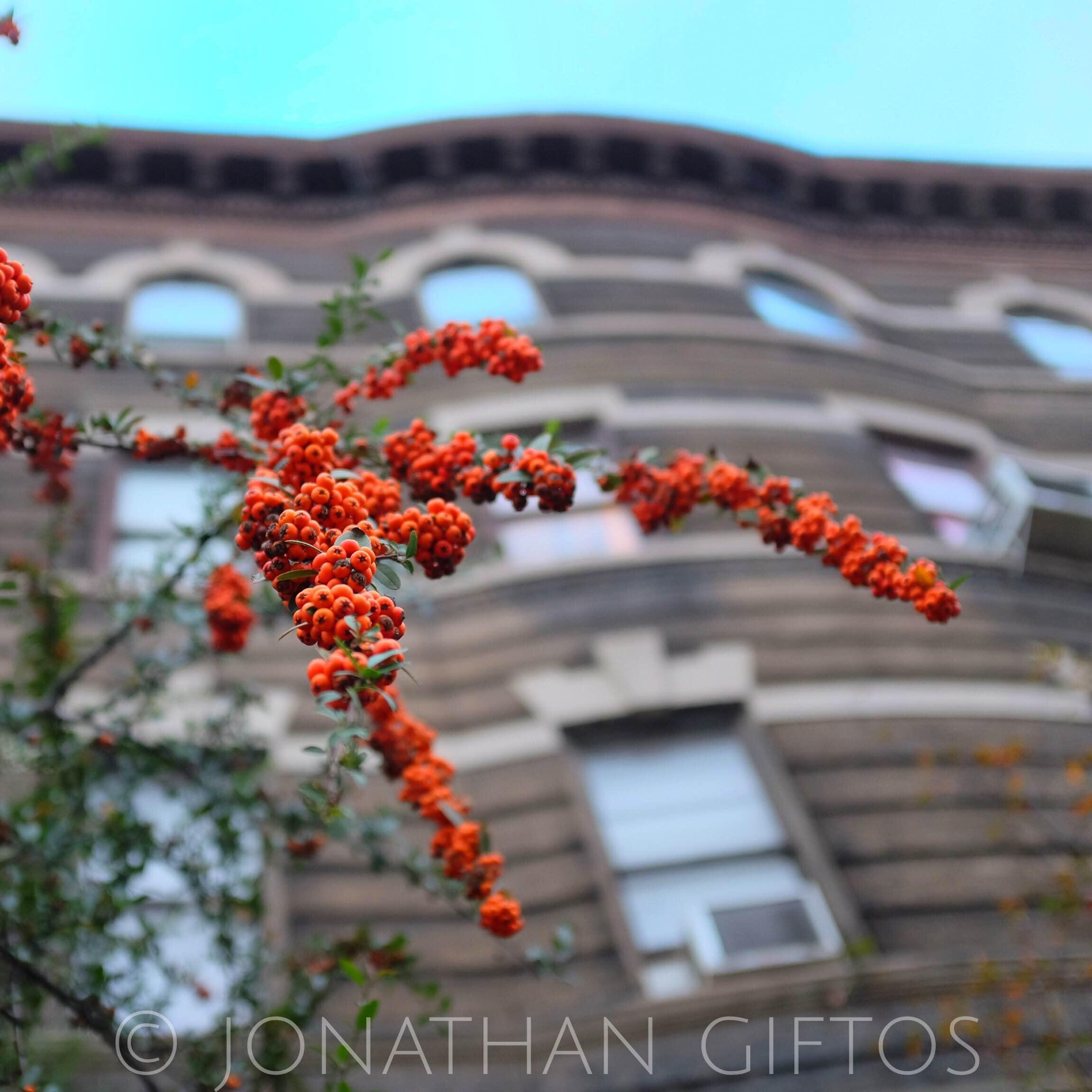 Urban Berries (2014)