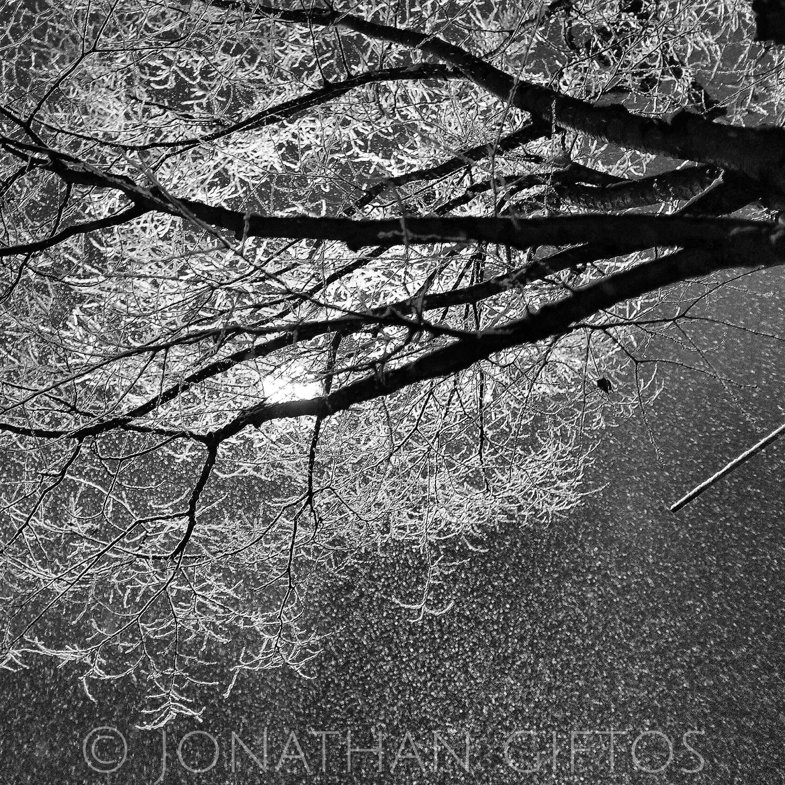Snow in Trees. Snow in Sky. (2015)