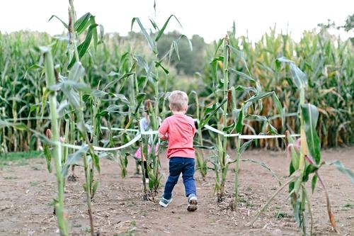 corn maze pic.jpg