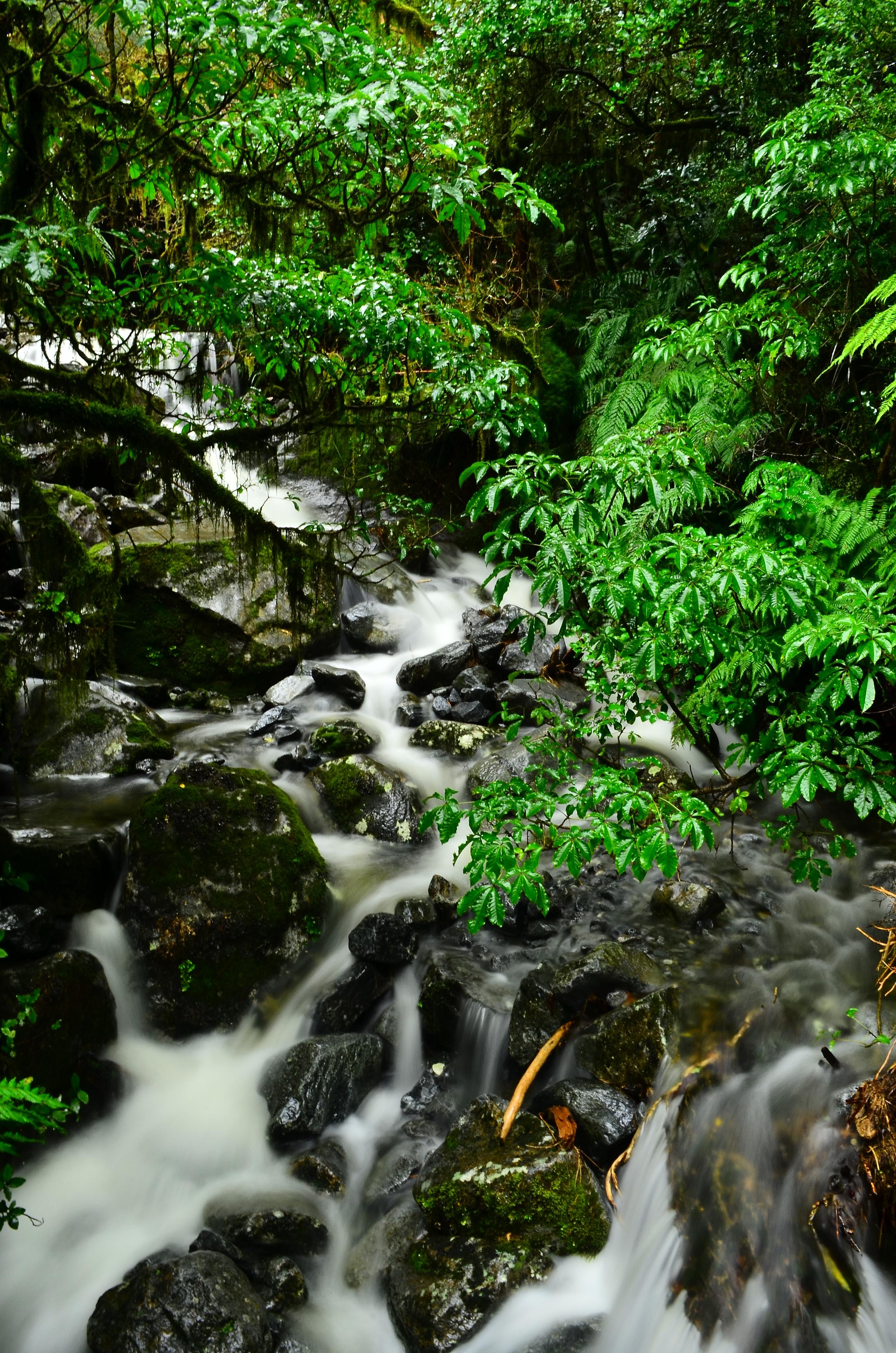 [19] Mountain Streams, South Island.