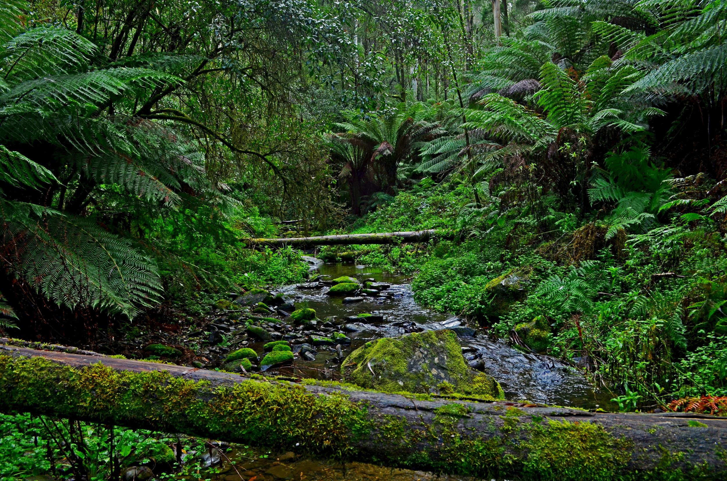 [3] Cape Otway Rainforest, Victoria.