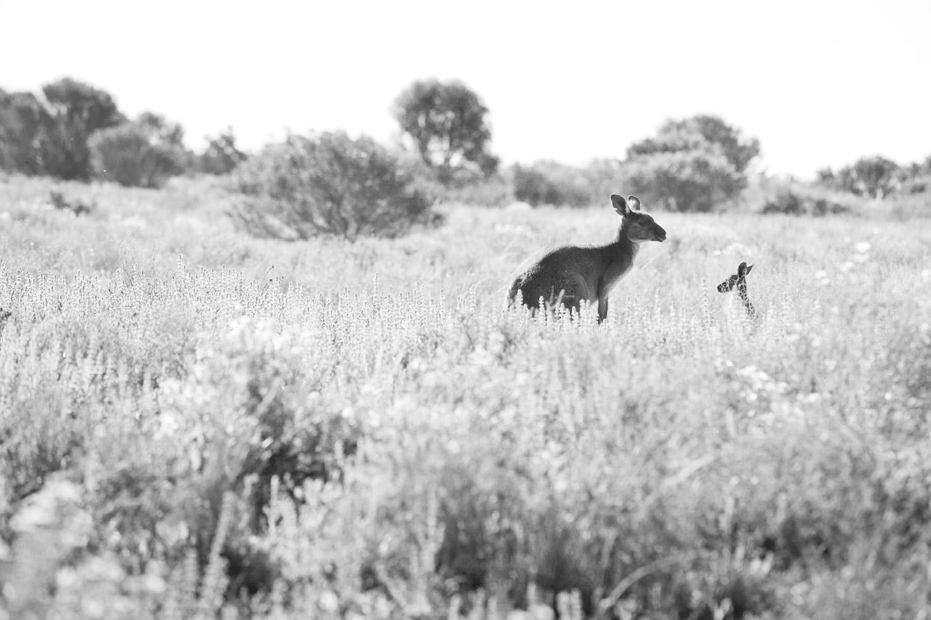 kangaroochild.jpg