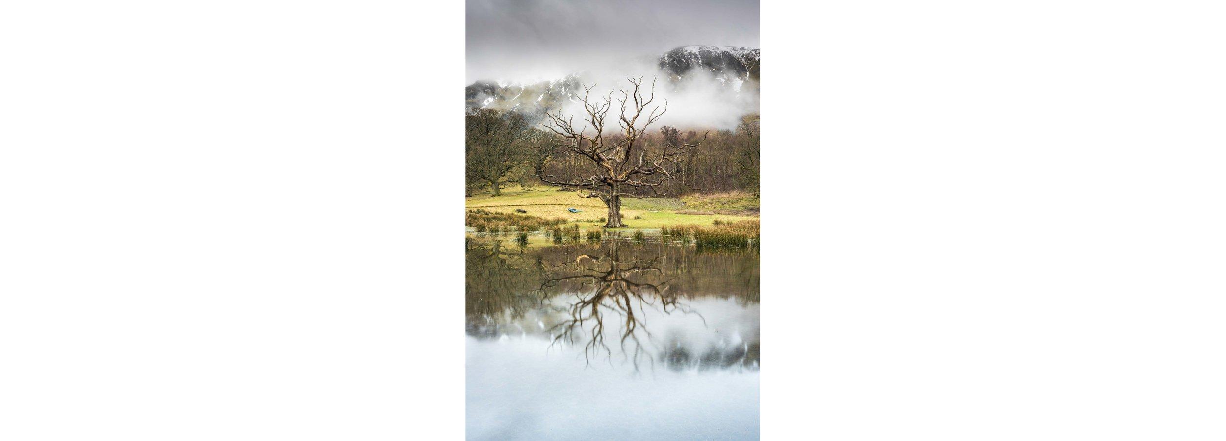 The Barren Tree Full Width.jpg