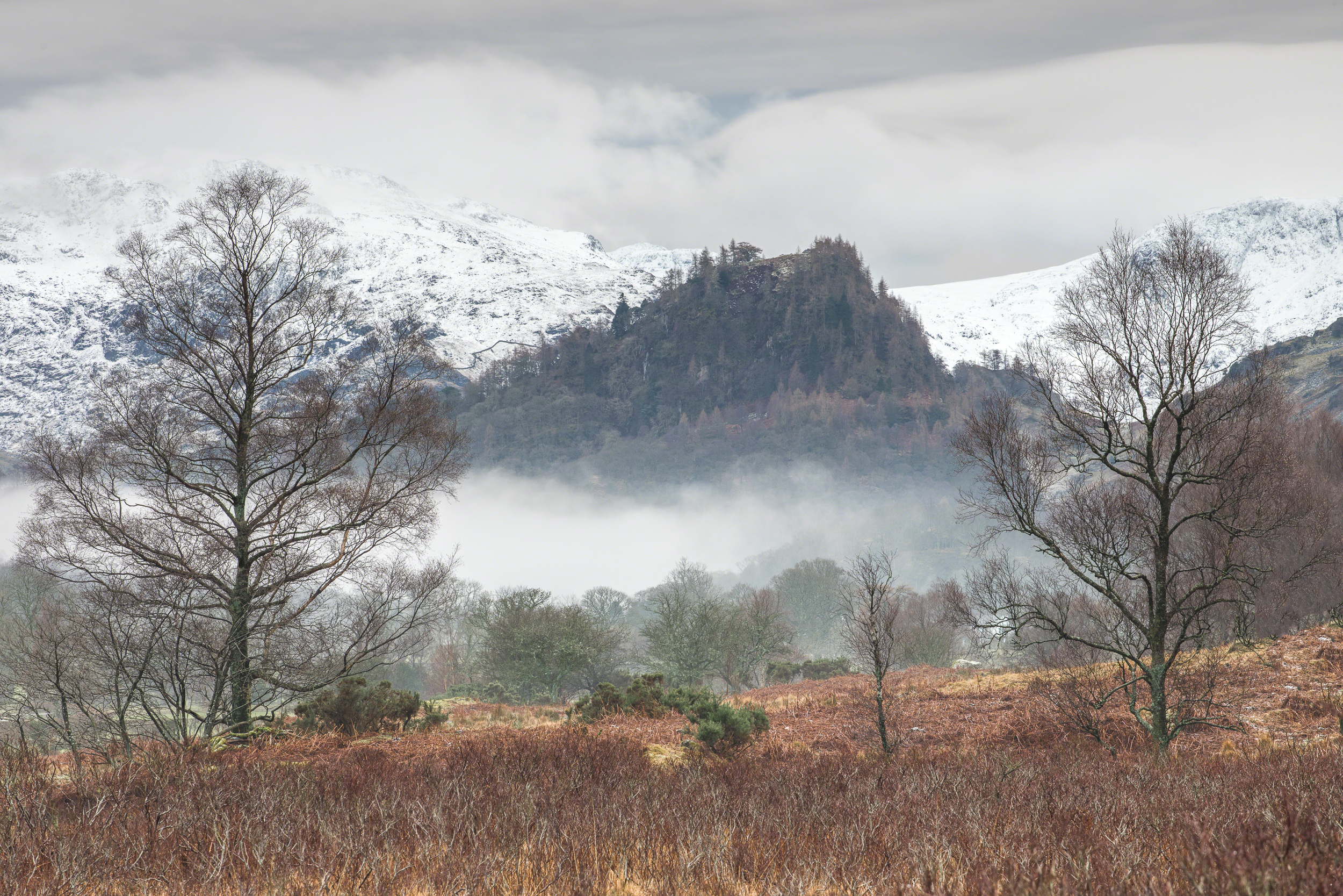 Castle Crag from Manesty Wood-1.jpg