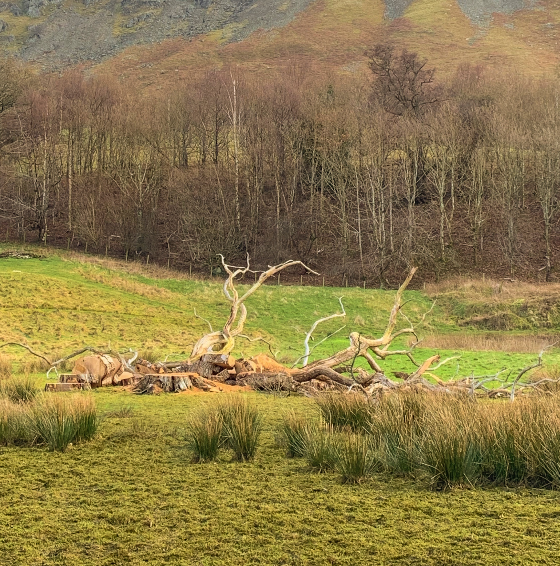 The+Fallen+Tree+-+Blog+Image+Lake+District.jpg