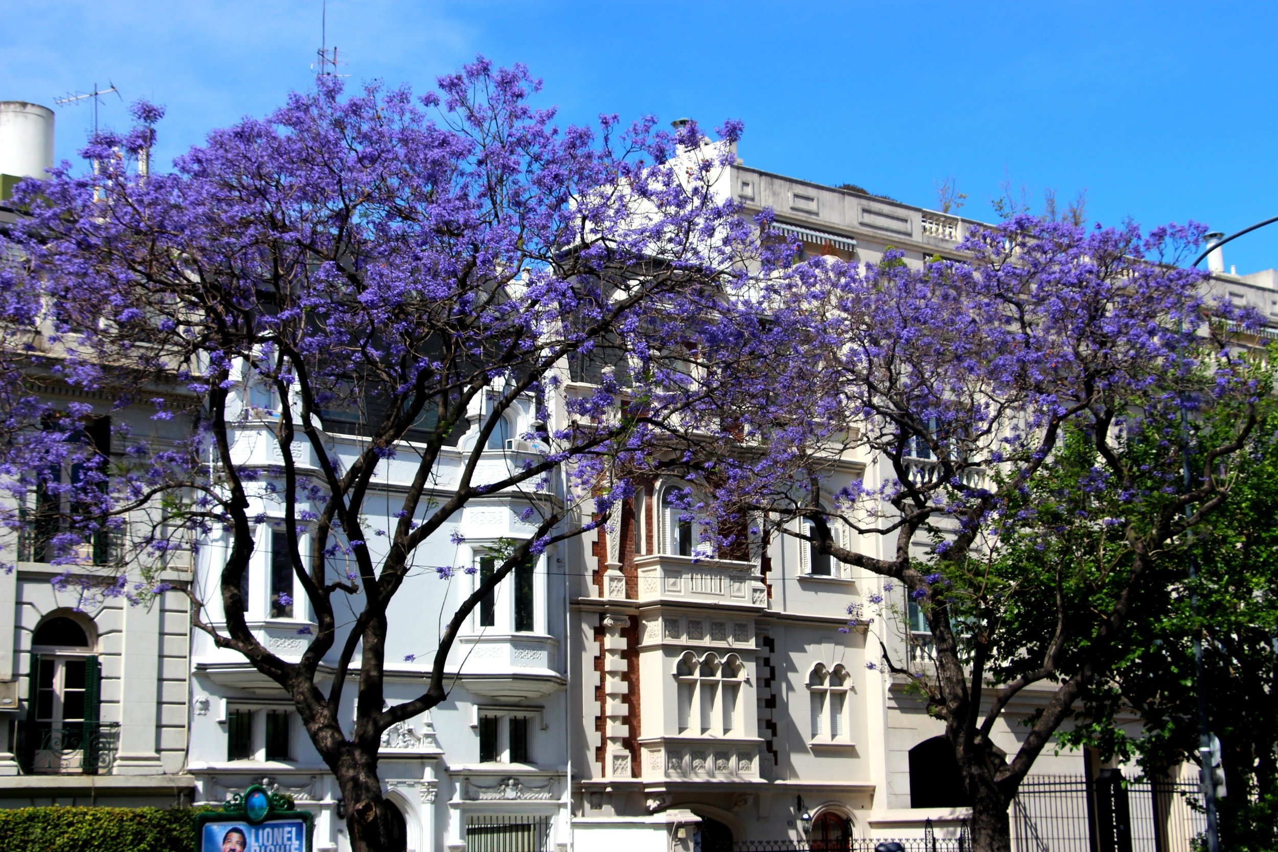 Buenos Aires Trees, Argentina