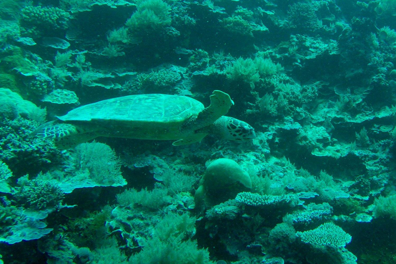 Turtles Palau Scuba