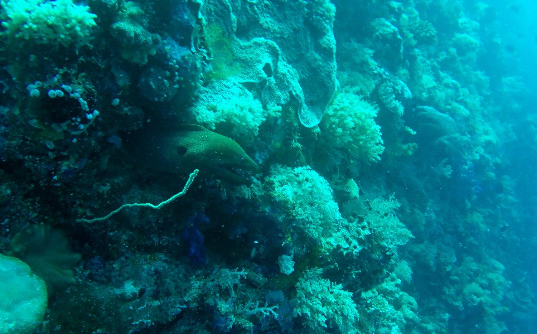 Eel Palau Scuba Diving
