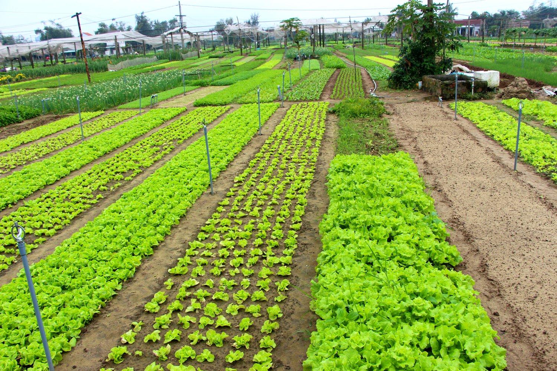 Vietnam Farm Market
