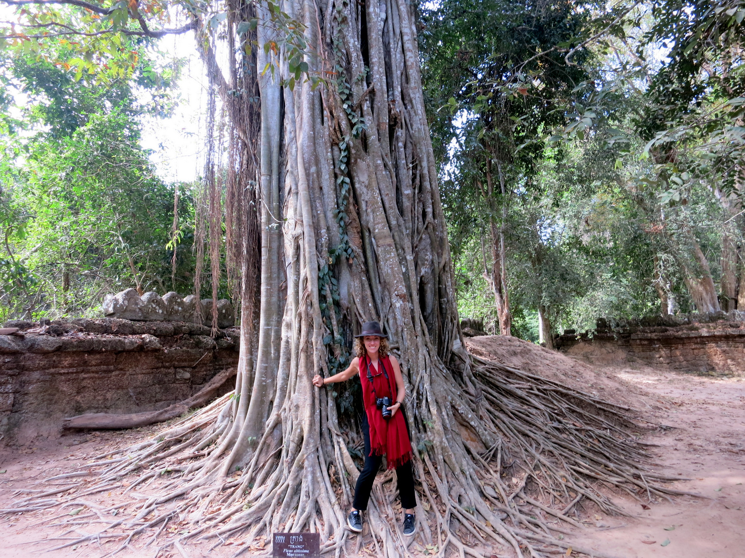 Angkor Explore tree