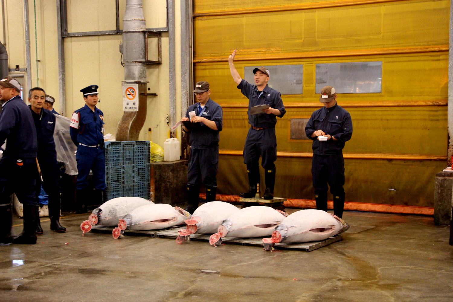 Tsukiji Fish Market Auction