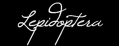 Lepidoptera - opera title transparent bg.png