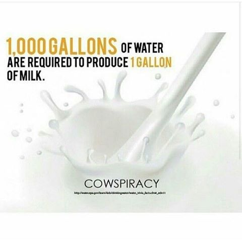 And it takes 10 gallons of cows' breast milk to make one pound of #cheese. Go #dairyfree ! Heck, it's #WorldVeganDay - why not try #Vegan ?