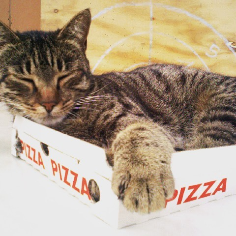On #caturday , why not get your NUMU Vegan #pizza delivered so #kitty can enjoy a luxurious new bed??
