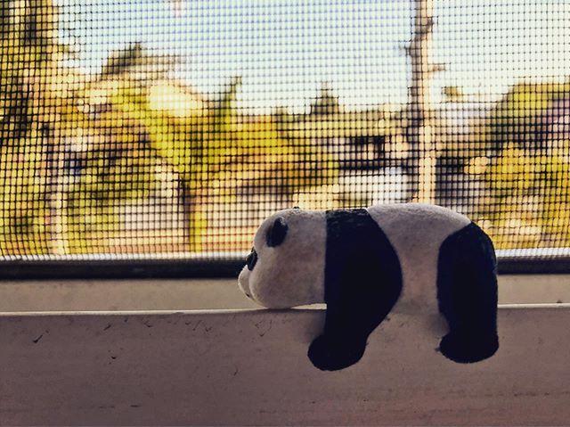 Panda is back!! @meganmeganbobegan