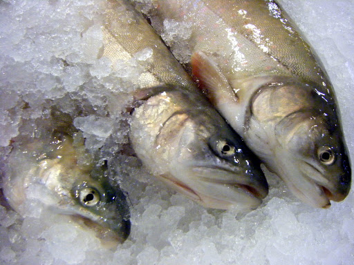 Fresh Fish.jpg