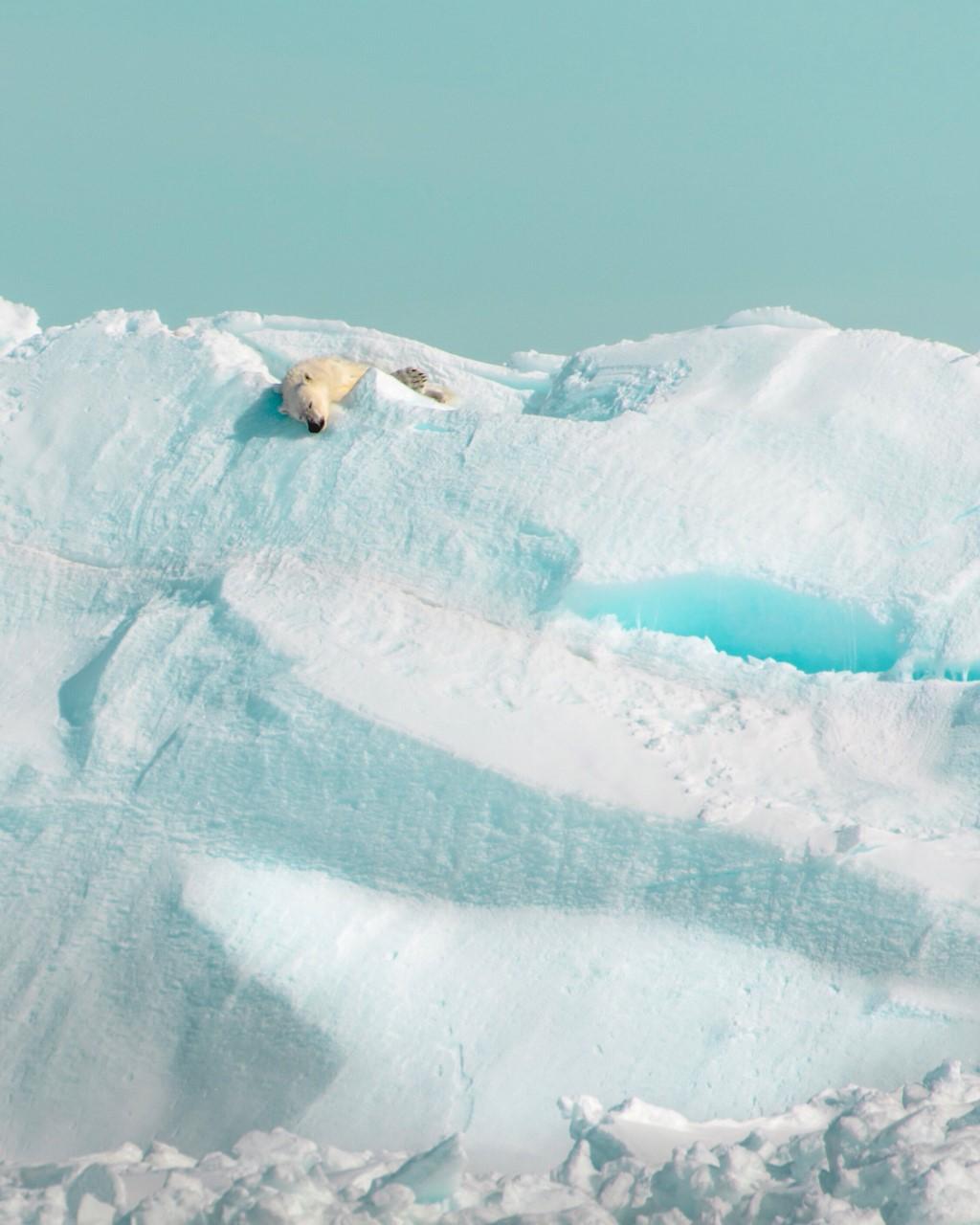 Polar Bear Sleeping on Ice Cliff.jpg