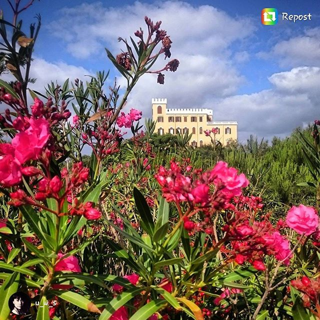 One of the many #majestetic places in #Alghero and #Sardinia 🏵 #bestplacesinitaly #sardegnaofficial #flowers #castle #hotel #travelguide #vacation #villalastronas #italiangoodnews