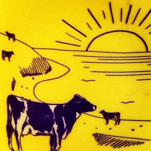 Happy cows at the #beach 🐴🐴🐴 Cool yoghurt 😎 #prendereilsole #sun #sardegna #arborea #yellow #yoghurt