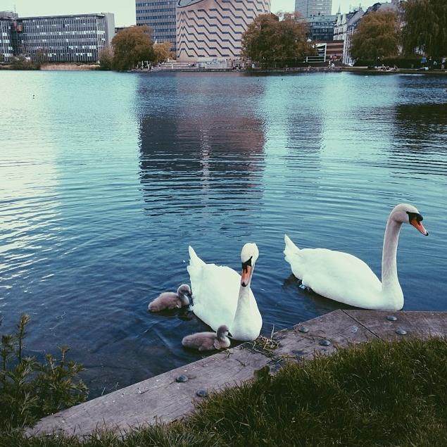 lakescopenhagen