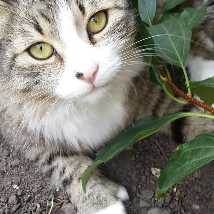 Our thumbcat Neko