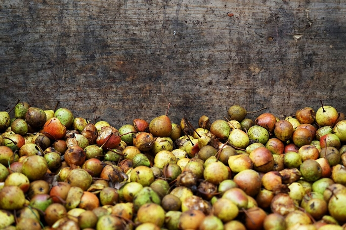 Olivers Cider 5.jpg